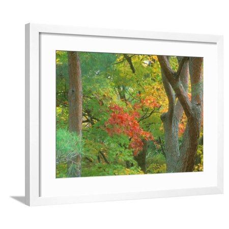 Rob Okochi Sanso Kyoto Japan - Okochi Sanso, Kyoto, Japan Framed Print Wall Art By Rob Tilley