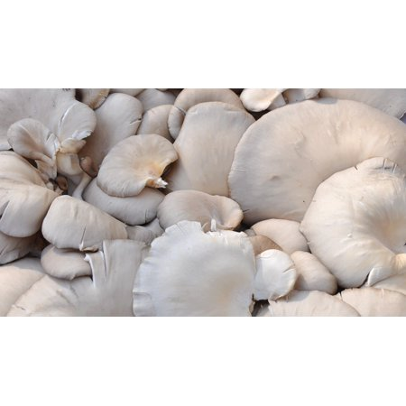 Canvas Print Mushroom Food Oyster Stretched Canvas 10 x