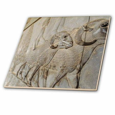 3dRose Iran, Shiraz, Persepolis, Relief Sculpture of the Achaemenid Empire - Ceramic Tile, 8-inch