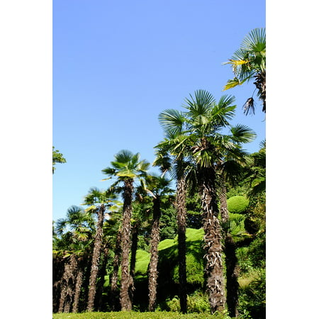 Laminated Poster Sky Tropical Having an Affair Palm Tree Blue Poster Print 11 x 17