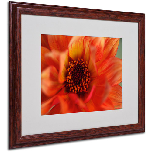 "Trademark Fine Art ""Fiery Dahlia"" by Kathy Yates, Wood Frame"