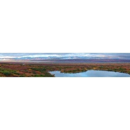 Tundra landscape Denali National Park Alaska USA Poster Print