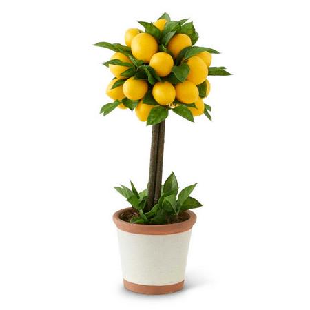 Lemons Topiary - 19 Inch Lemon and Foliage 1 Ball Topiary Tree in Ceramic Pot