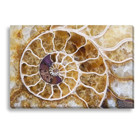 New Era Ammonite Indoor/Outdoor Canvas Print