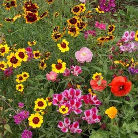 Pollinator Mix - Western - 2 g - Sows ~25 Sq. Ft. - Non-GMO, Open Pollinated - Annuals & Perennials - Mix of Wildflower & Flower Seeds Ideal For the Western USA