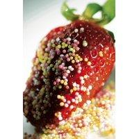 LAMINATED POSTER Desert Sweet Strawberry Shortcake Strawberry Poster Print 24 x 36
