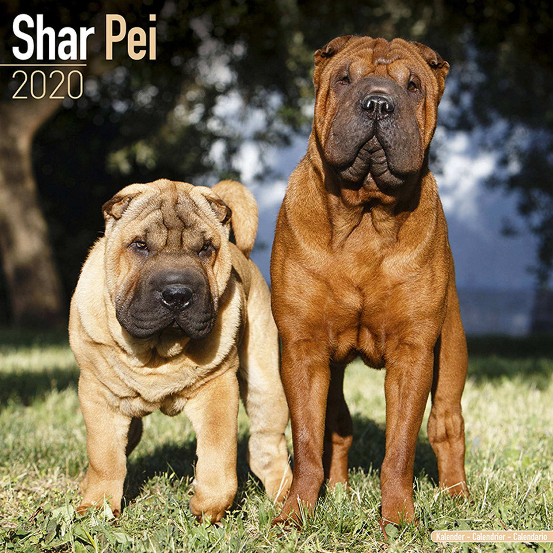 Pei Rating: Shar Pei Dog Breed Calendar