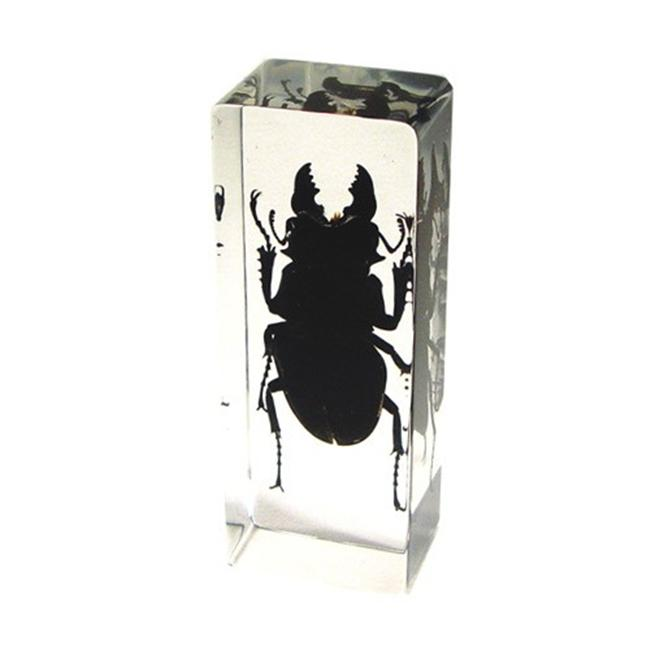 Ed Speldy East PW301 Real Bug Paperweight Regular-Large-Black Stag Beetle