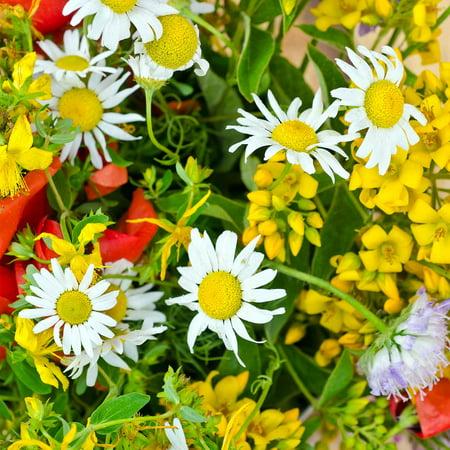 Dried Wildflower - Dryland Wildflower Mix - 4 Oz - Wild Flower Garden Seed Mixture - Dry & Sunny Areas: Gloriosa Daisy, Plains Coreopsis, Coneflower, More
