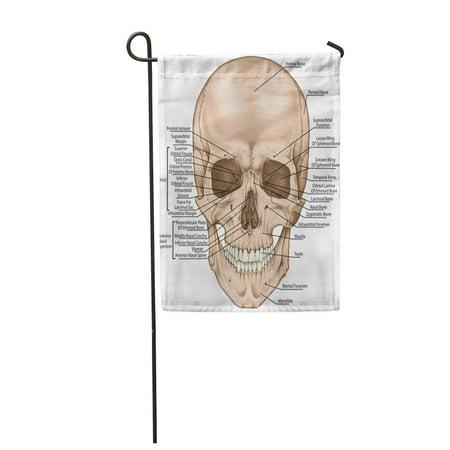 KDAGR The Bones of Cranium Head Skull Boundaries Facial Skeleton Viscerocranium Garden Flag Decorative Flag House Banner 12x18 - Boundary Flags