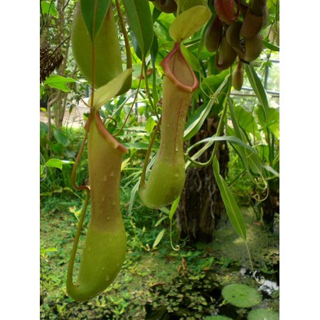 Rainforest Animal Pictures - LAMINATED POSTER Jungle Nature Tropical Pitcher Plant Rainforest Poster Print 24 x 36