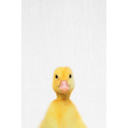 Duck Baby Duck Photo Nursery Kids Childrens Room Decor Print Wall Art By Tai Prints