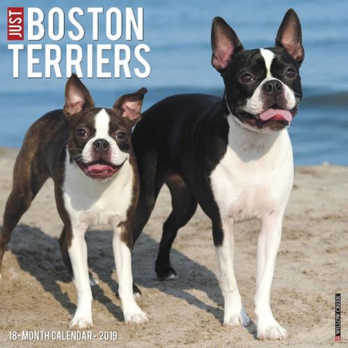 Willow Creek Press 2019 Just Boston Terriers Wall Calendar