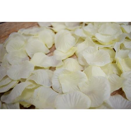 Bulls Silk - Quasimoon Beige / Ivory Silk Rose Petals Confetti for Weddings in Bulk by PaperLanternStore