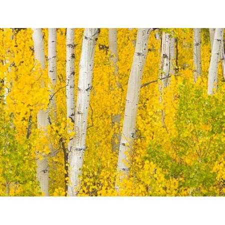 Trees and Autumn Foliage Print Wall Art By John Eastcott & Yva Momatiuk