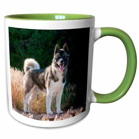 3dRose Akita standing near dried grasses - Two Tone Green Mug, 11-ounce