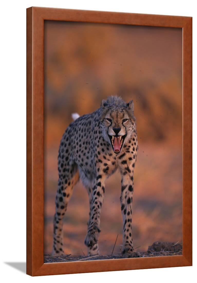 CLEARANCE Cat Adult Woman Cheetah Animal Feline Theater 4 Piece Costume
