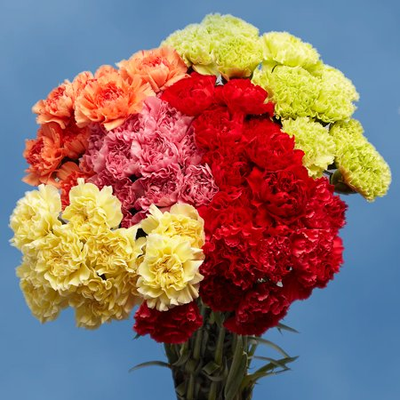 GlobalRose 100 Fresh Cut Assorted Color Carnations for Valentine