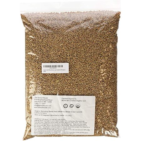 Perennial Ornamental Grasses (Certifed Organic non-GMO Hard Wheat for Wheat Grass; Pet Grass; Cat Grass; Ornamental Grass (5 pounds) )