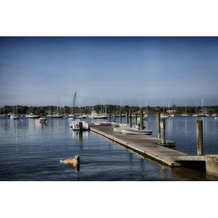 LAMINATED POSTER Dog Boat Long Island Sound Connecticut Harbor Poster Print 24 x