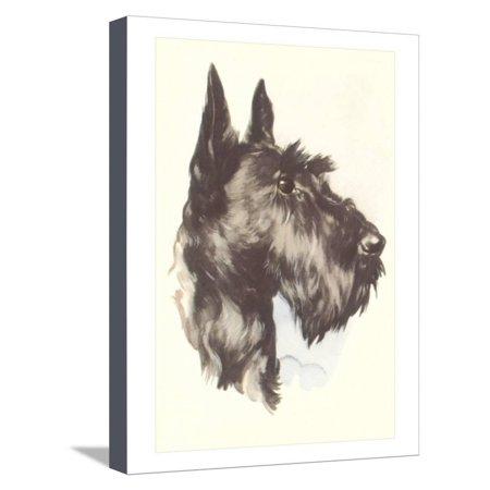 Scottie Dog Stretched Canvas Print Wall Art