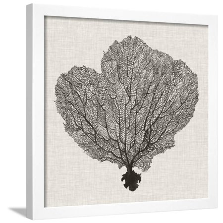 - Shadow Sea Fan I Framed Print Wall Art By Grace Popp