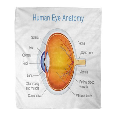 Anatomic Bend (ASHLEIGH Semtomn Decorative Throw Blanket 58x80 Inches Blue Components of Human Eye About Anatomy and Physiology Warm Flannel Soft Blanket for Couch Sofa Bed )