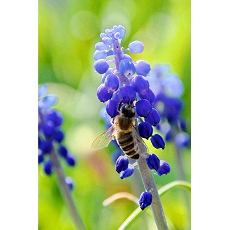 Bee on a Blue Flower Nature Journal: 150 Page Lined Notebook/Diary
