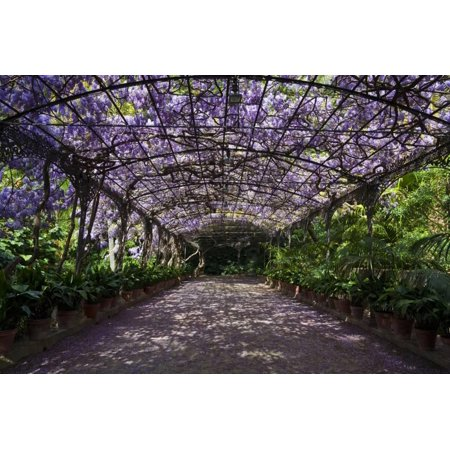 The Wisteria Arbour in Full Bloom Print Wall Art By Green Light (Full Bloom Collection)