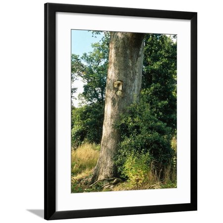 Unusual Garden Enchanted Forest Face Set in Tree Trunk October Groombridge Place, Kent Framed Print Wall Art By Sunniva Harte