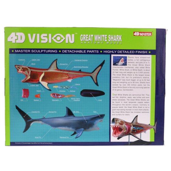 Educational Play Set Great White Shark Anatomy Model Multipack Of 2