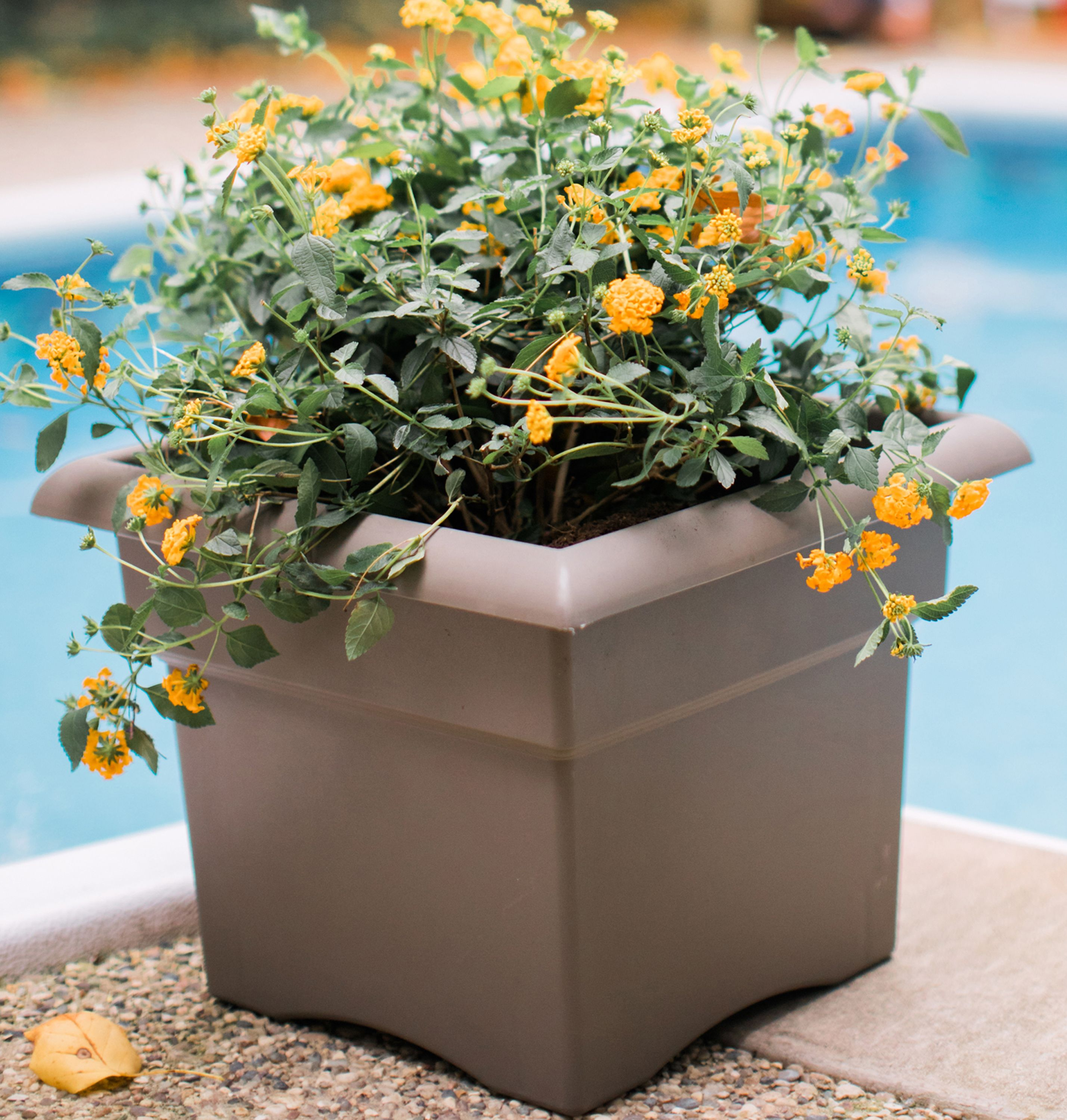 "Bloem Veranda Deck Box Planter 18"" Chocolate by Bloem"