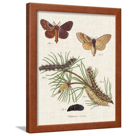 Life Cycle of a Moth II Framed Print Wall Art By Johann Esper