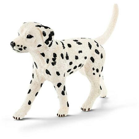 Dalmatian, Male - Baby Dalmatian