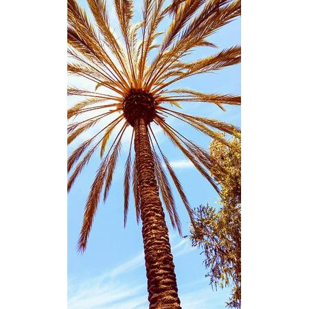 LAMINATED POSTER San Diego Flora Landscape Palm Tree Poster Print 24 x