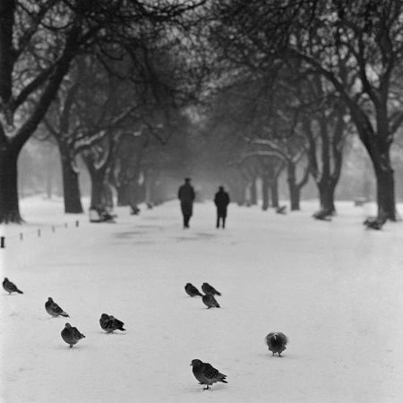 Gay Halloween Nights London (Regent's Park, London. Pigeons on a Snowy Path with People Walking Away Through an Avenue of Trees Print Wall Art By John)