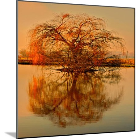 Golden Tree Botanical Landscape Photography Wood Mounted Print Wall Art By Philippe - Landscape Tree Mount