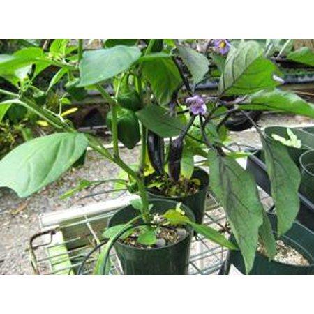 Image of Hawaii Live Plants Vegetable Starter