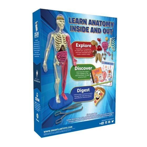 Smart Lab Squishy Human Body Kit Walmart