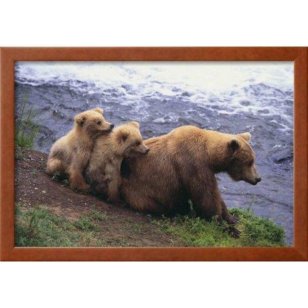 Brown Bear and Cubs Framed Print Wall Art By DLILLC - Walmart.com
