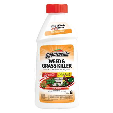 Spectracide Weed & Grass Killer Concentrate, 16-fl