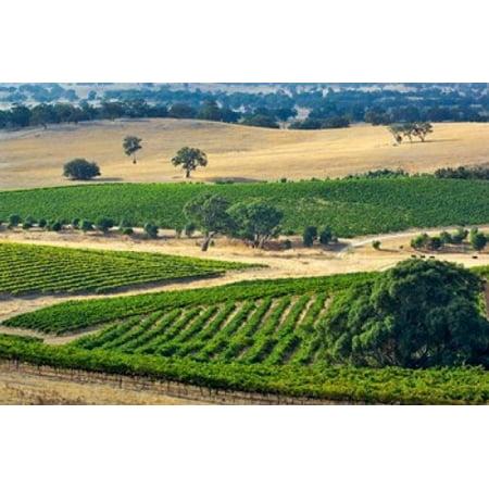 Mountadam vineyard winery on High Eden Road Barossa Valley Australia Canvas Art - Janis Miglavs  DanitaDelimont (36 x 24)