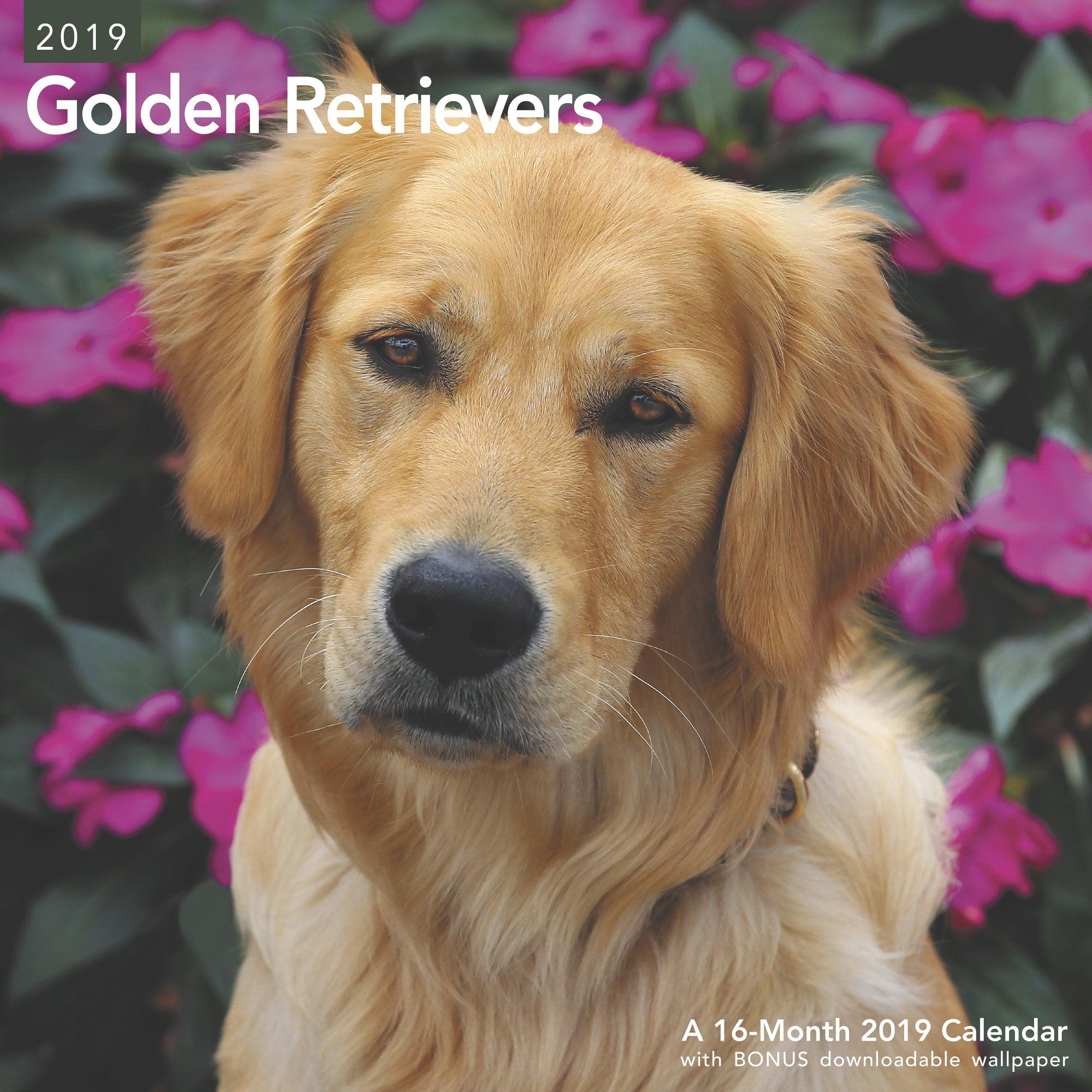 Mead Golden Retrievers Wall Calendar - Wall Calendars