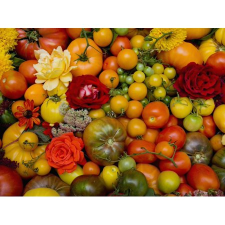 The Tomato Festival in Santa Rosa, California, Local Fruit and Vegtables Print Wall Art By Gerald & Buff Corsi