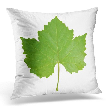 Punch Grape Leaf - ARHOME Green Wine Grape Leaf on White Agriculture Pillow Case Pillow Cover 20x20 inch