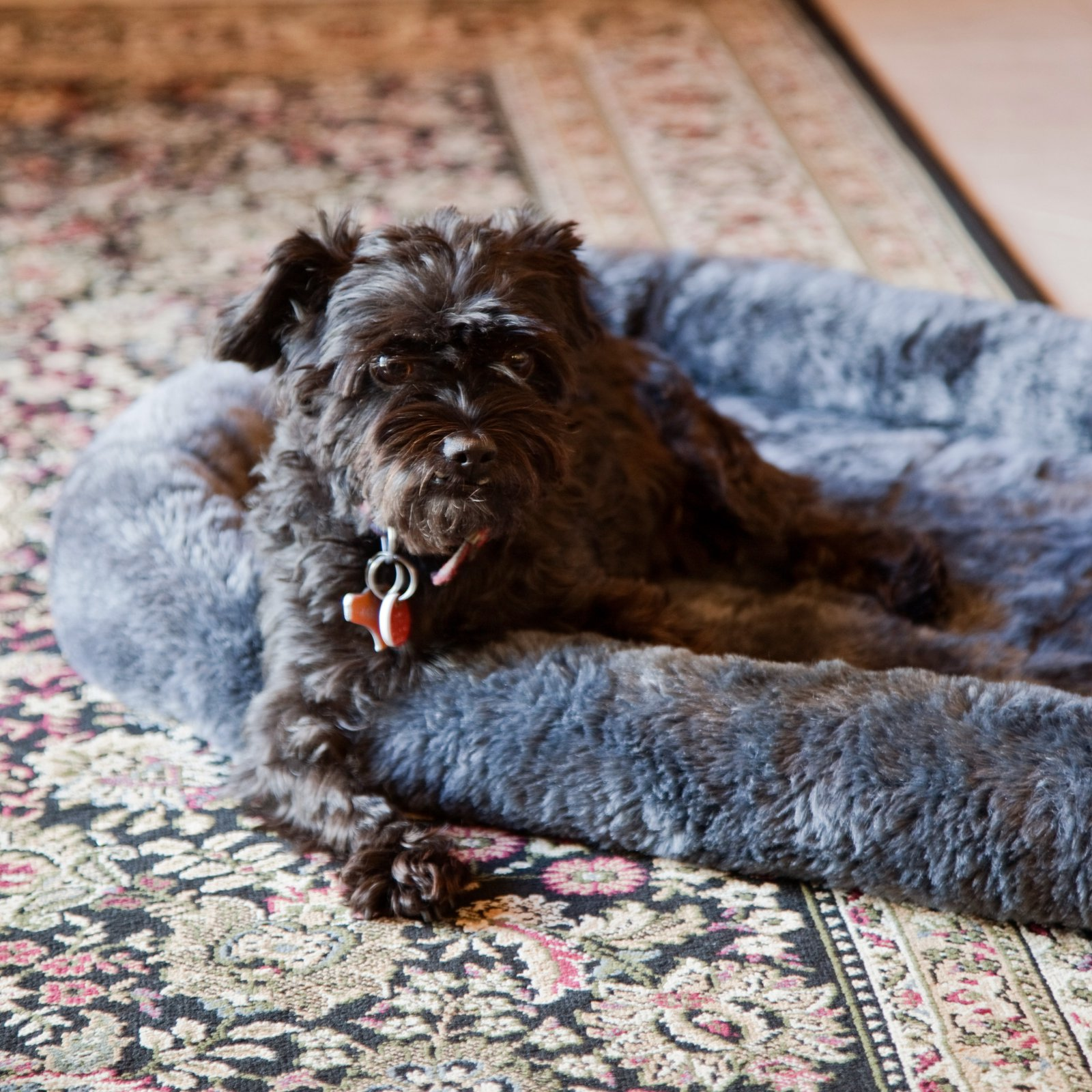 """Midwest Quiet Time Pet Bed, Gray, 36"""""""
