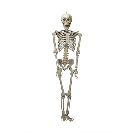 Northlight Seasonal Life-Size Jointed Skeleton Hanging Halloween Decoration](Printable Halloween Pages)