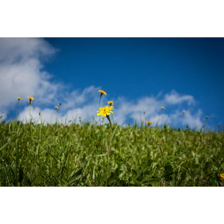 Laminated Poster Grass Landscape Blue Green Sky Clouds Poster Print 11 x - Sky Is Blue Grass Is Green Halloween
