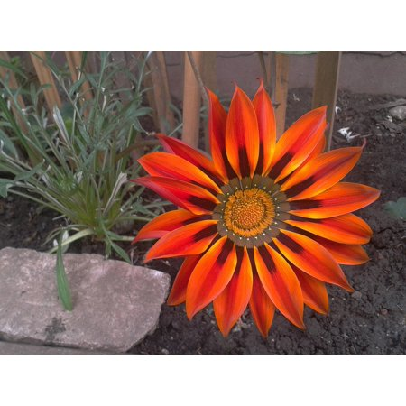 LAMINATED POSTER Flower Flowers Orange Color Garden Poster Print 24 x 36