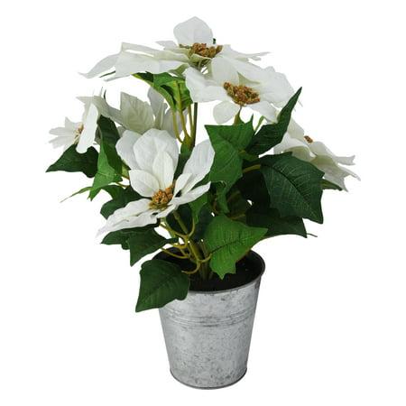 Poinsettia Lace (15.5